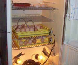 Инкубатор из старого холодильника своими руками: подробная инструкция