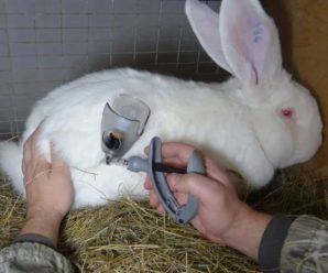 Какие прививки делают кроликам: показания и возраст проведения процедуры