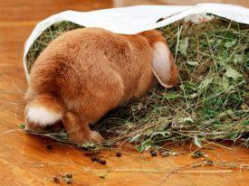 Кролик в мешке с сеном