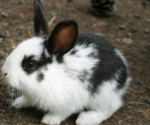 Крольчиха поедает детенышей: причины и эффективные решения ситуации