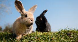 Дикие кролики