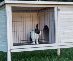 Клетки для декоративных кроликов своими руками: простая инструкция