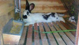 Кормушки для кроликов своими руками