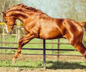 Особенности донской породы лошадей