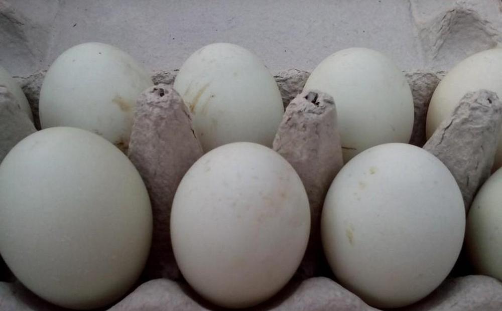 Яйца Индийского бегуна