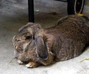 Болезни кроликов: симптомы, способы лечения и профилактики
