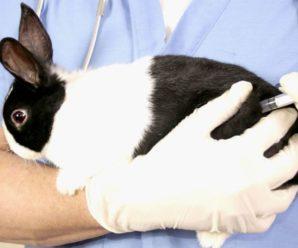 Запор у кроликов – причины и меры профилактики