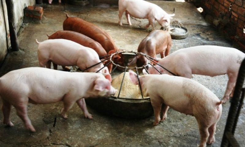 Свинарник для свиньей своими руками