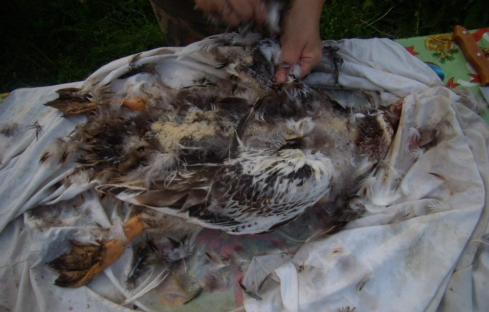 Тушка утки