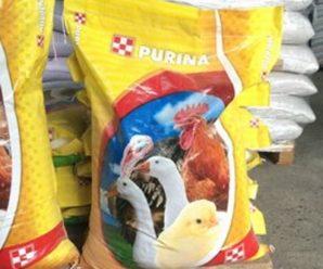 Комбикорм Пурина – секрет успеха правильного выращивания птицы