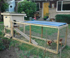 Как правильно построить вольер для содержания кур