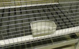 Поилка в клетке