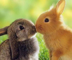Ринит у кроликов: что это за болезнь, отчего она появляется и чем лечится