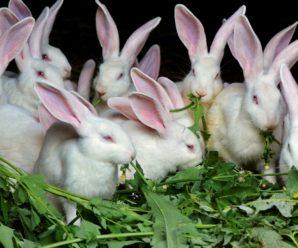 Комбикорм для кроликов: состав, преимущества, виды и инструкция по изготовлению