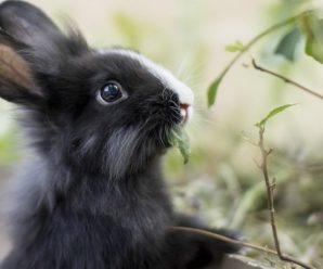 Домашний корм для кроликов: состав и рецепты изготовления своими руками