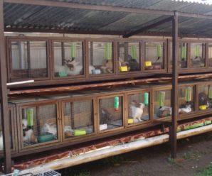 Клетки для кроликов в 2 и 3 яруса: капитальный дом своими руками
