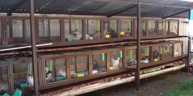 Клетки для кроликов в 2 яруса и 3 яруса