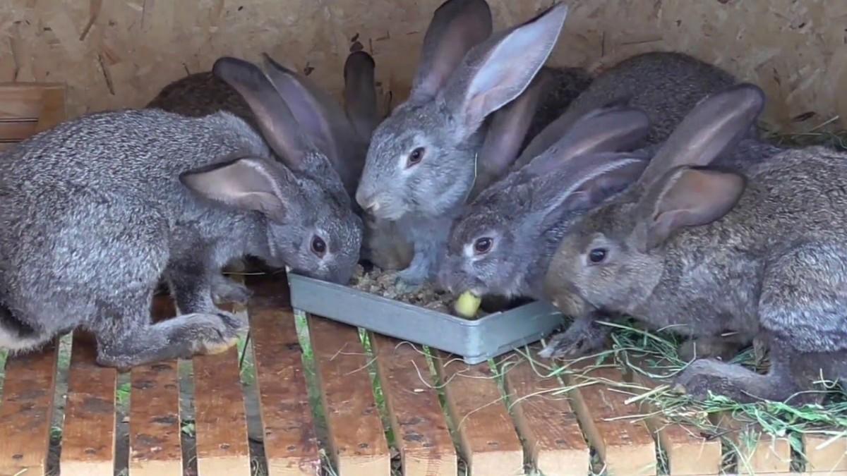Корм для кроликов своими руками
