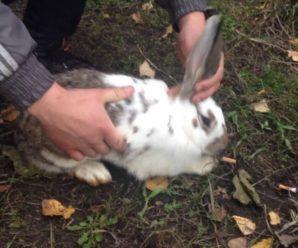 Вздутие живота у кроликов: возможные причины и методы лечения