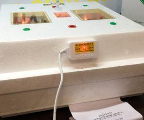 Простой и доступный: насколько выгодно использовать инкубаторы «Квочка»