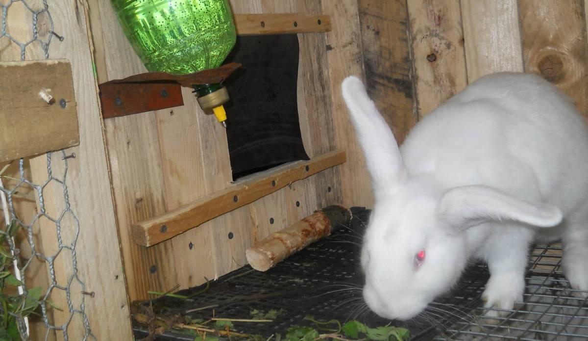 Как сделать автопоилку для кроликов. Кролики 47