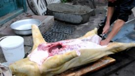 Как разделать свинью