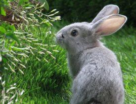Кролик у куста