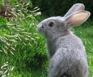 Чем кормить кроликов, чтобы они набирали вес: правила составления рациона