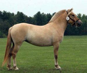 Каурая лошадь: особенности редкой масти и её разновидности