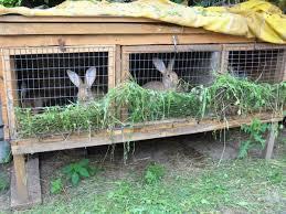 Варианты содержания кроликов