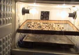 Особенности инкубаторов для выращивания птицы