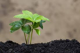 Особенности плодородного грунта для обустройства огорода