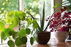 Особенности комнатных растений в интерьере