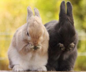 Как Понять Кролика. 17 Удивительных Сигналов Поведения.