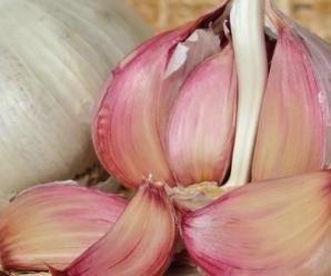 Как выращивать чеснок в открытом грунте
