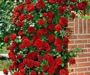 Какие цветы выбирать: местные или импортные