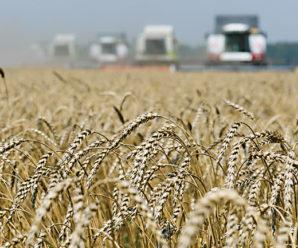 Как продать пшеницу?