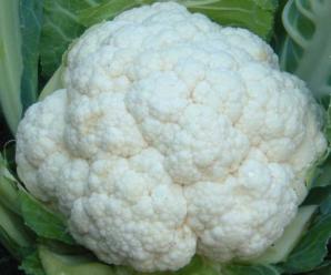 Капуста цветная Сноуболл: особенности выращивания и ухода