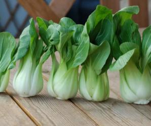 Китайская капуста: выращивание и уход