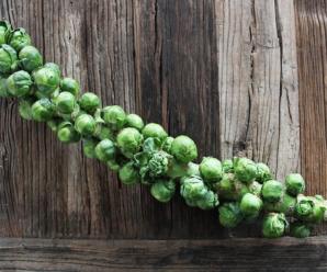 Как сажать брюссельскую капусту на рассаду